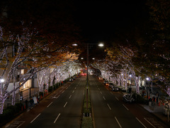 Illumination_Omotesando201411_13.jpg