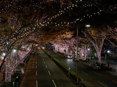 Illumination_Omotesando201411_14.jpg
