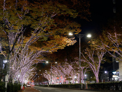 Illumination_Omotesando201411_15.jpg